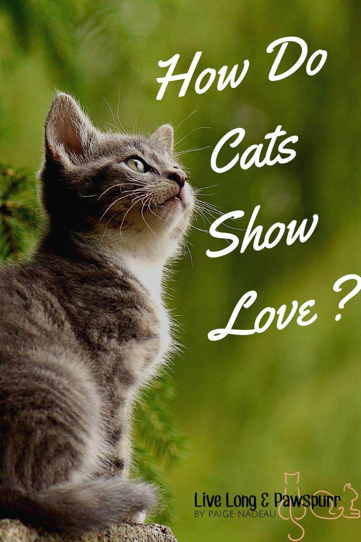 "How Cats Show Love"" class="