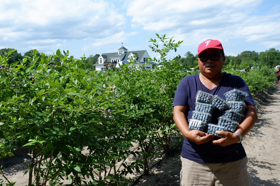 Blueberry Picking in New Jersey at DiMeo's U-Pick Blueberry Farm.jpg
