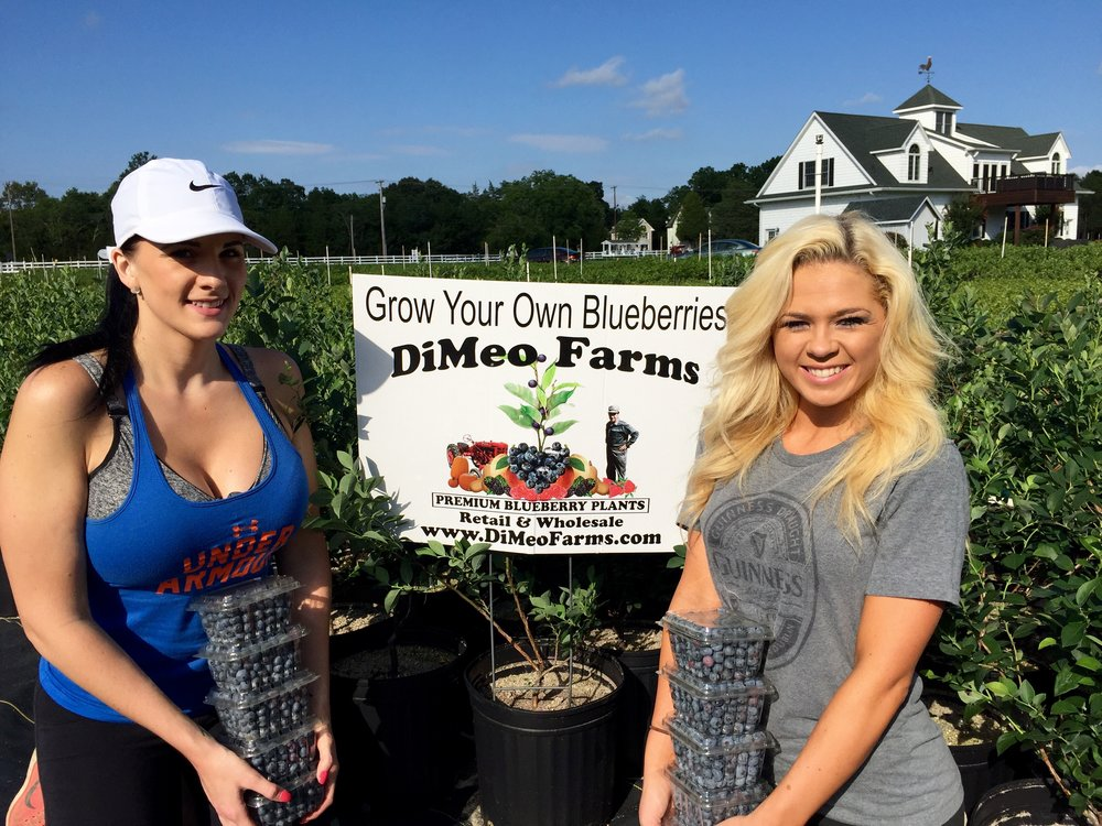 DiMeo Farms Blueberry Picking and Blueberries Plants.jpg