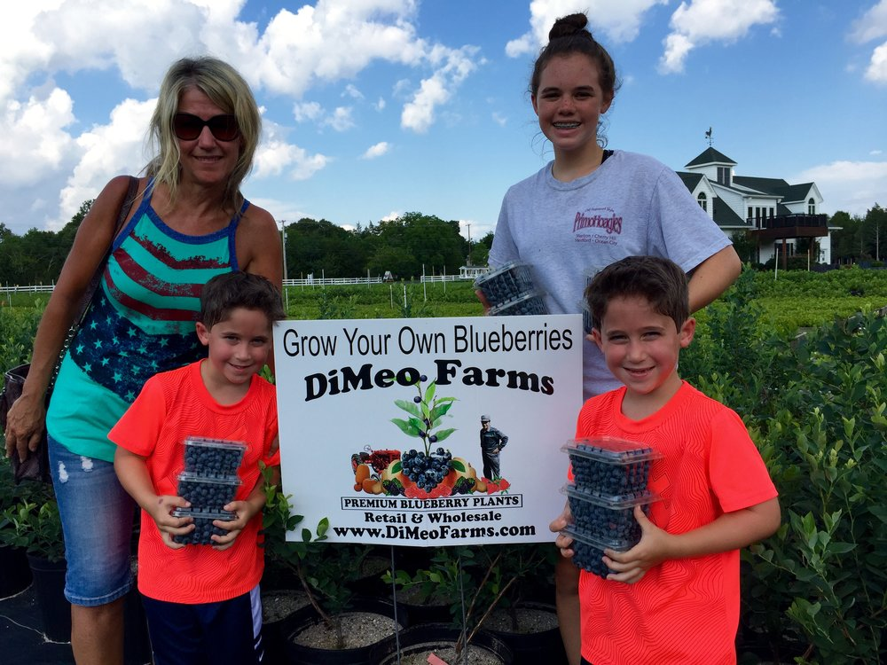 Pick Blueberries in New Jersey at DiMeo Blueberry Farms.jpg