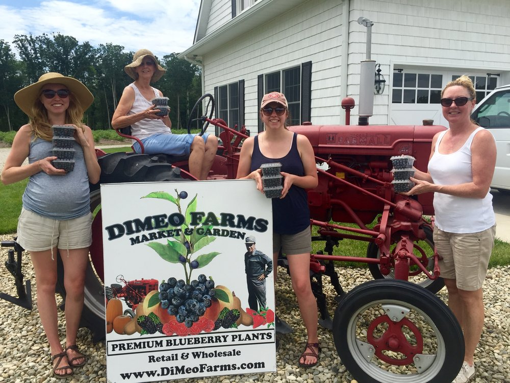 Women Love Blueberry PIcking at DiMeo Farms.jpg