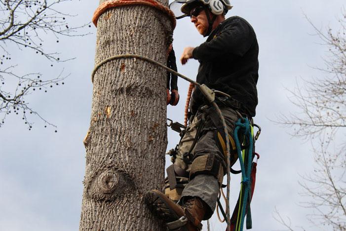 tree-service-lawrenceville-ga.jpg