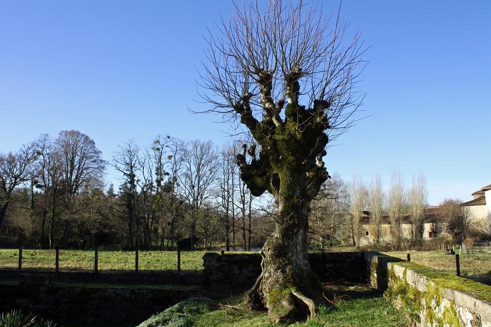 winter-tree-243690_960_720.jpg