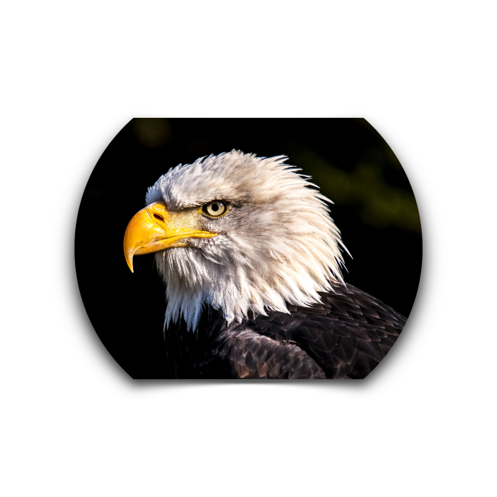 BIRD.FITNESS -