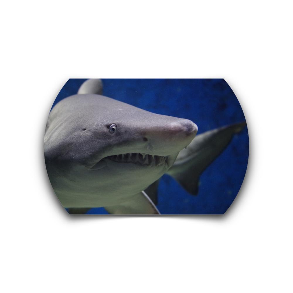 SHARK.FITNESS -