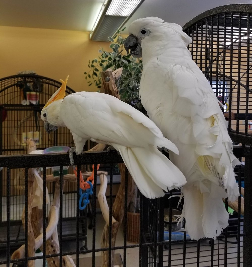 Copy of Metro Denver Parrot Rescue