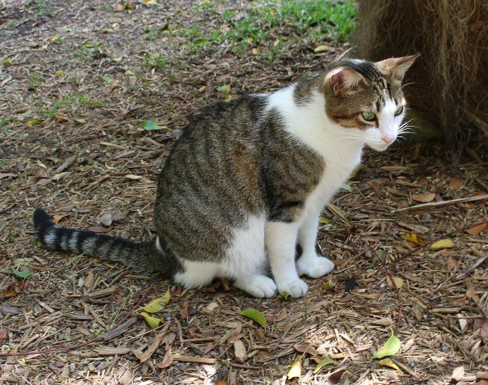 Copy of Hemingway's Cats