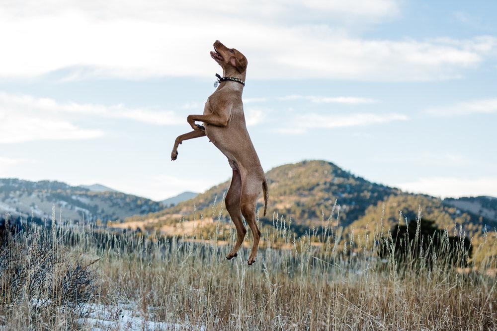 Golden Colorado pet photographers017.jpg