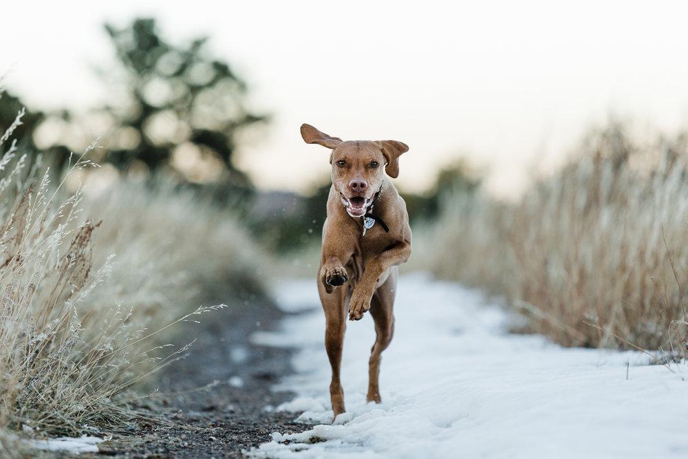 Golden Colorado pet photographers015.jpg