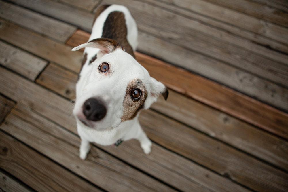 best dog photography in Boulder_010.jpg