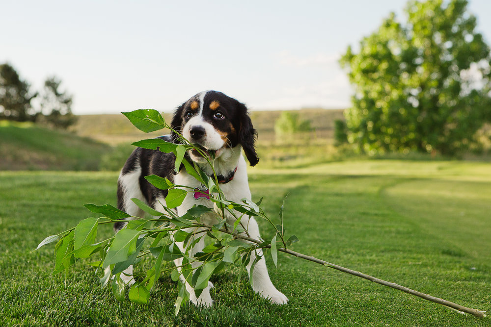 Best Denver pet photographers_023.jpg