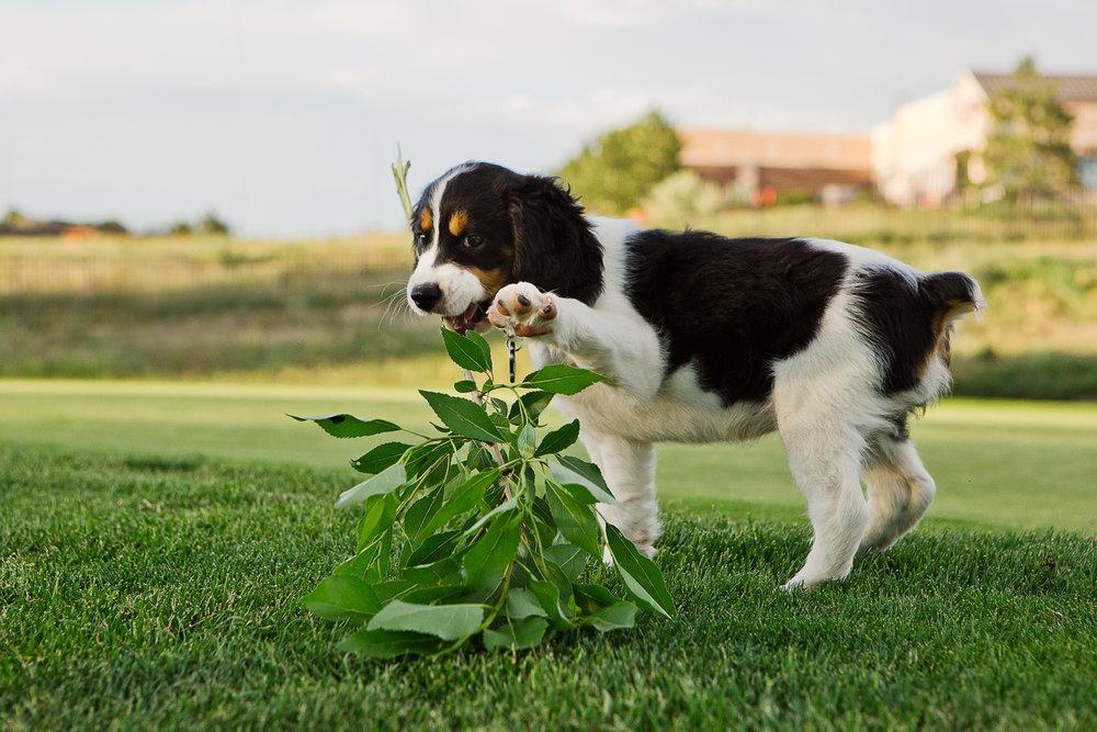 Best Denver pet photographers_025.jpg