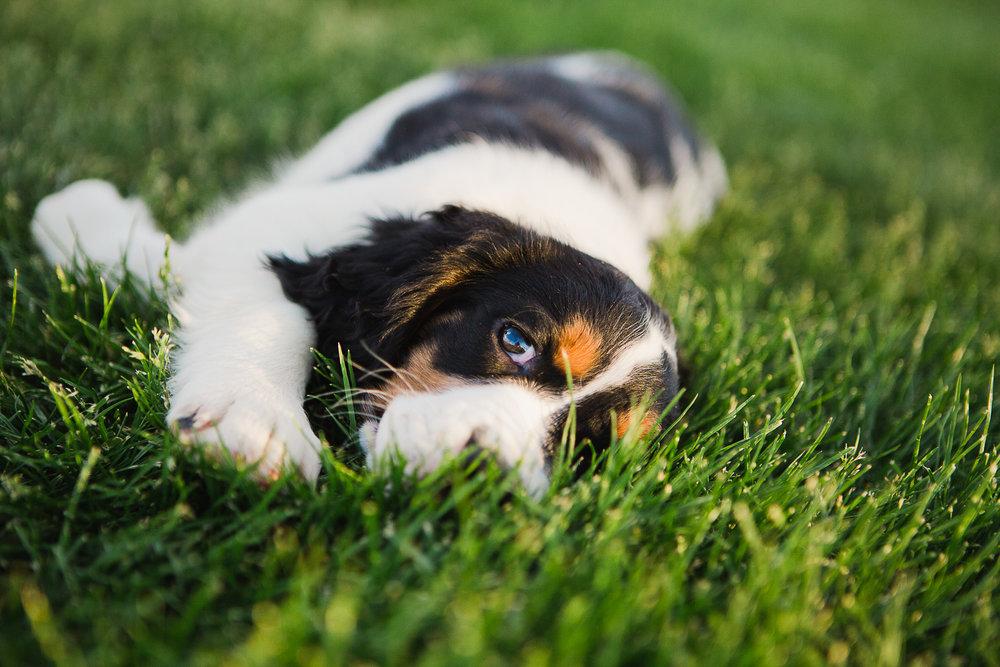 Best Denver pet photographers_031.jpg