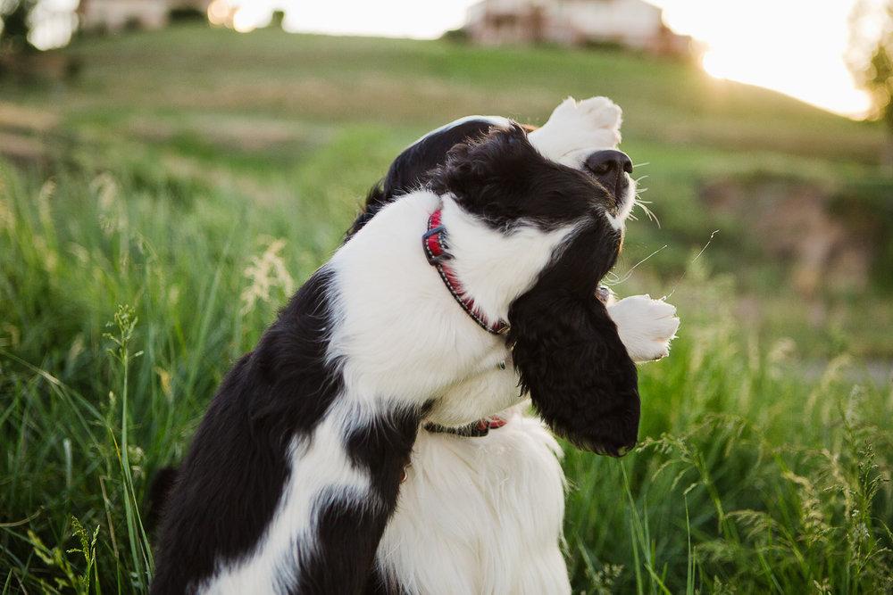 Best Denver pet photographers_036.jpg