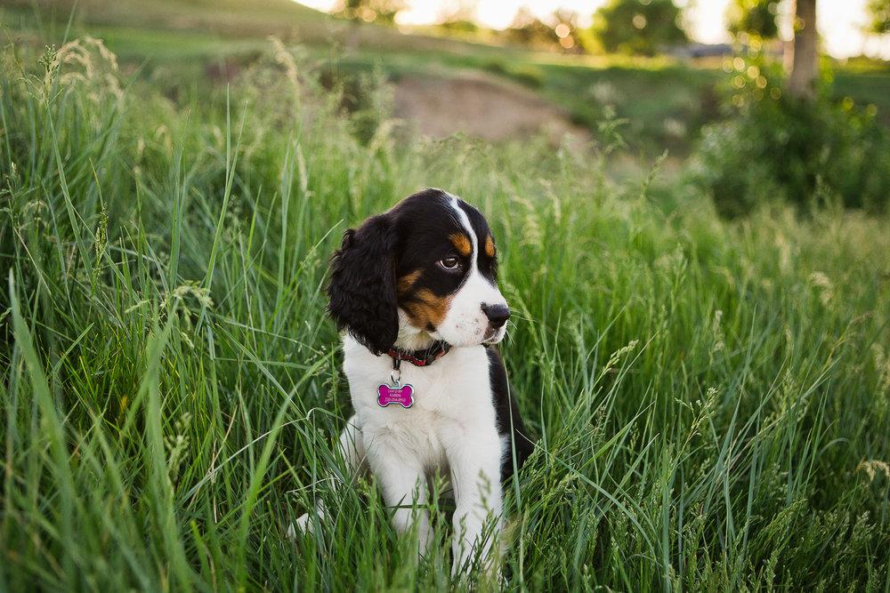 Best Denver pet photographers_037.jpg