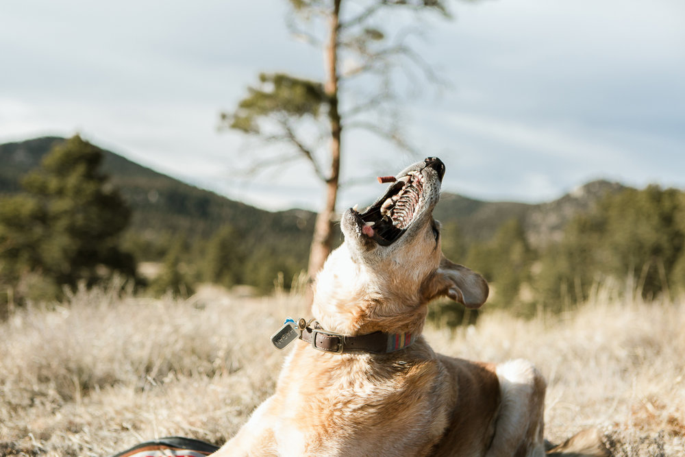 Best dog photographers in Boulder015.jpg