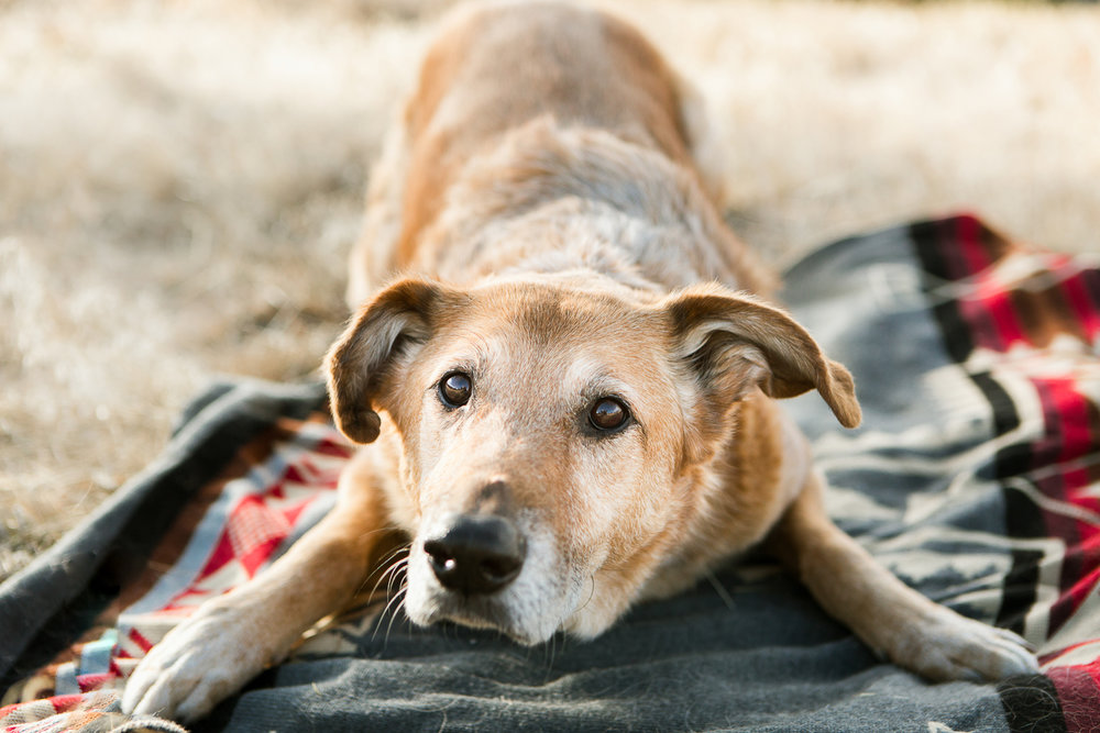 Best dog photographers in Boulder014.jpg