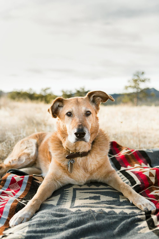 Best dog photographers in Boulder013.jpg