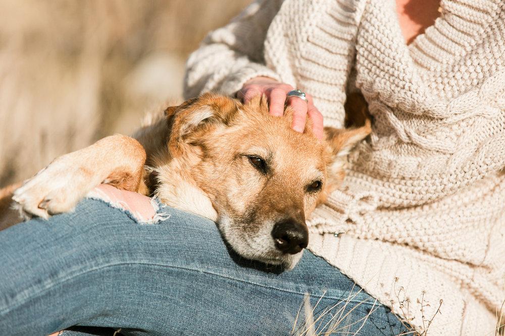 Best dog photographers in Boulder029.jpg