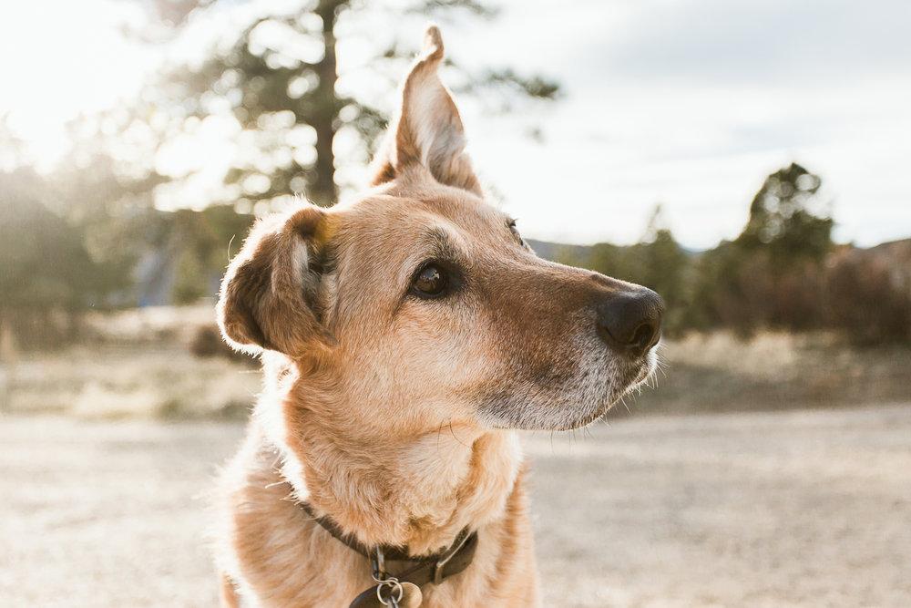 Best dog photographers in Boulder040.jpg