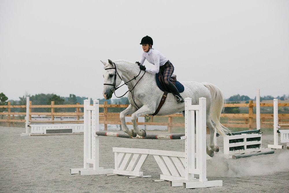 colorado sport horse photographer_008.jpg