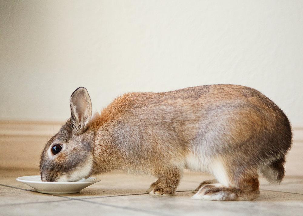 boulder house rabbit photos001.jpg