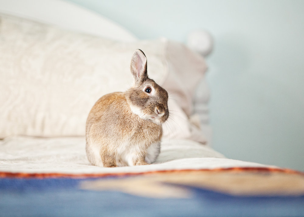 boulder house rabbit photos006.jpg