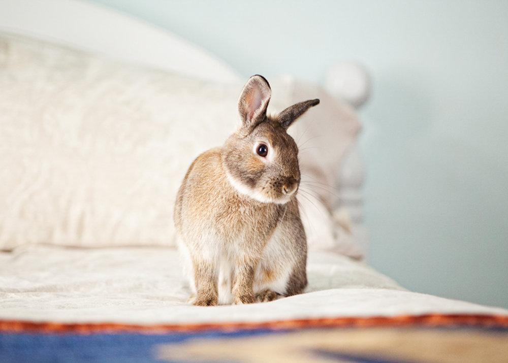 boulder house rabbit photos009.jpg