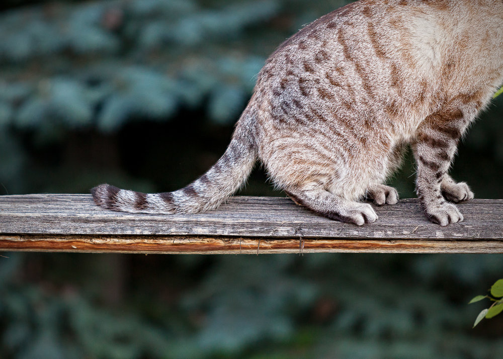 Boulder Denver cat photography_002.jpg