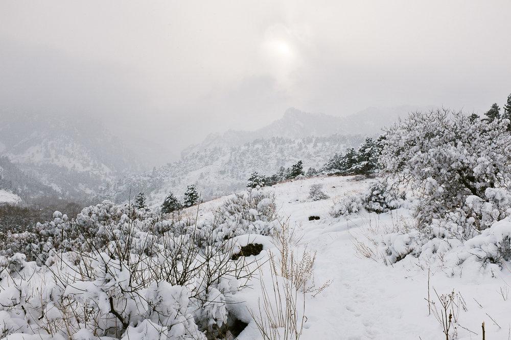 colorado winter dog photography inspiration_007.jpg