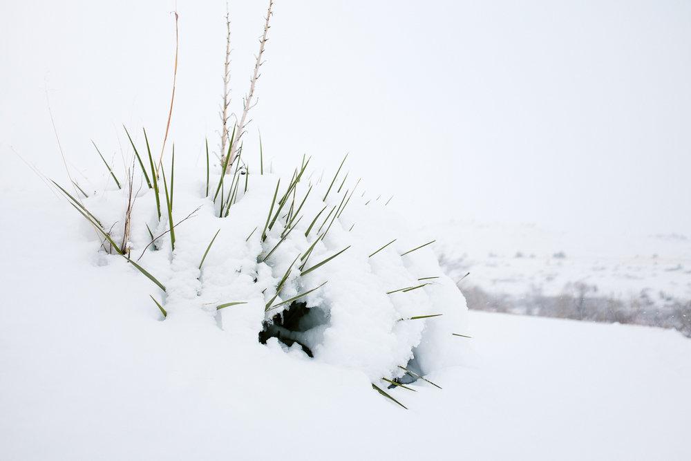 colorado winter dog photography inspiration_014.jpg