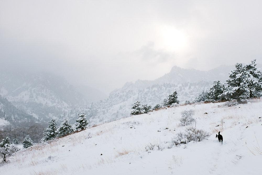 colorado winter dog photography inspiration_011.jpg