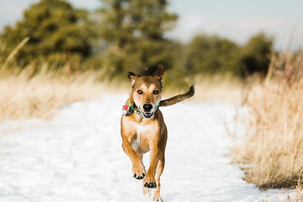 winter pet photography inspiration_002.jpg