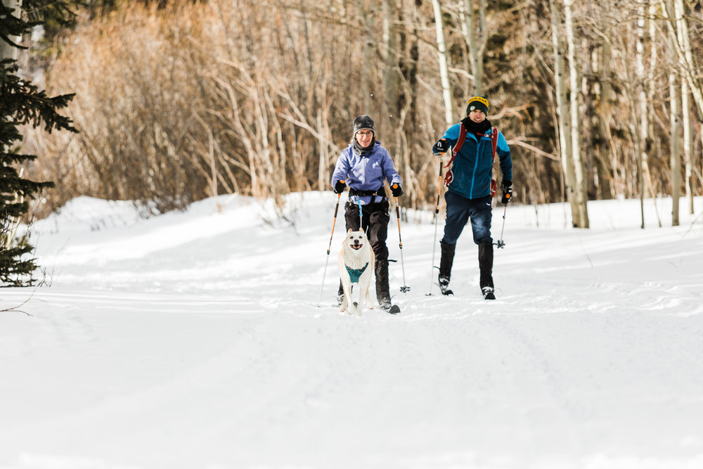 skijouring near denver colorado_029.jpg