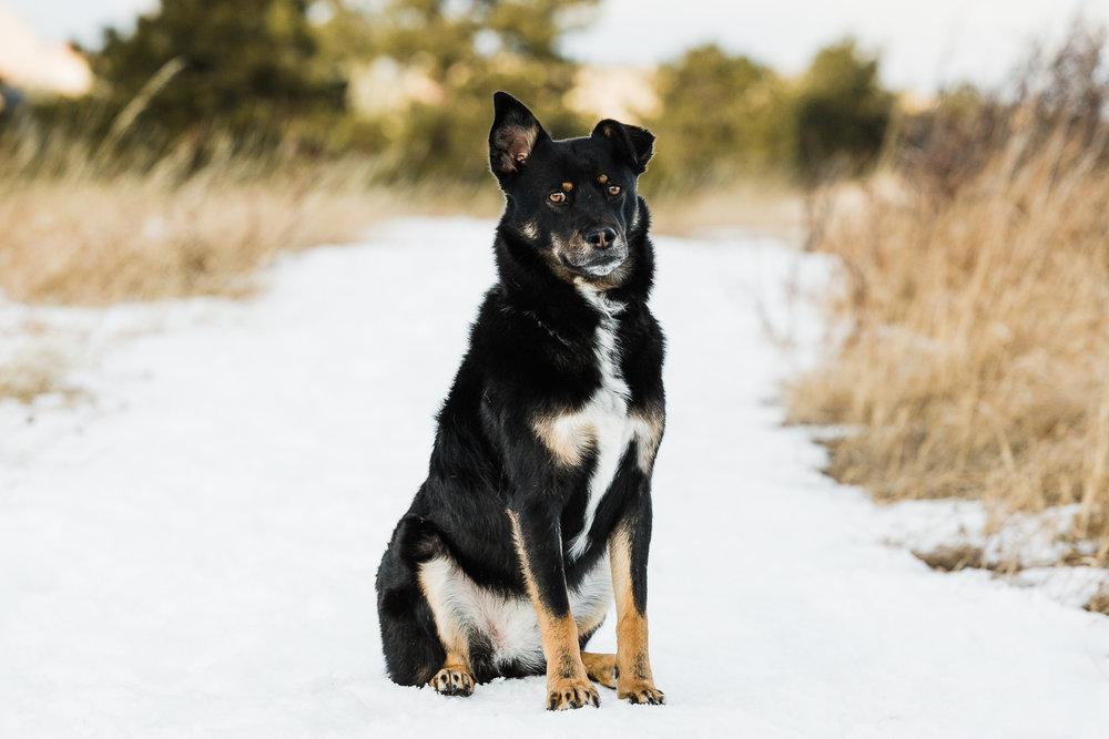 winter pet photography inspiration_006.jpg