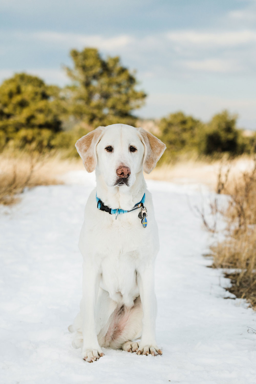 dog-in-colorado-snow.jpg
