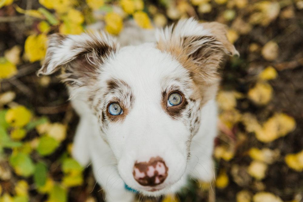 cute puppy photography boulder_001-2.jpg