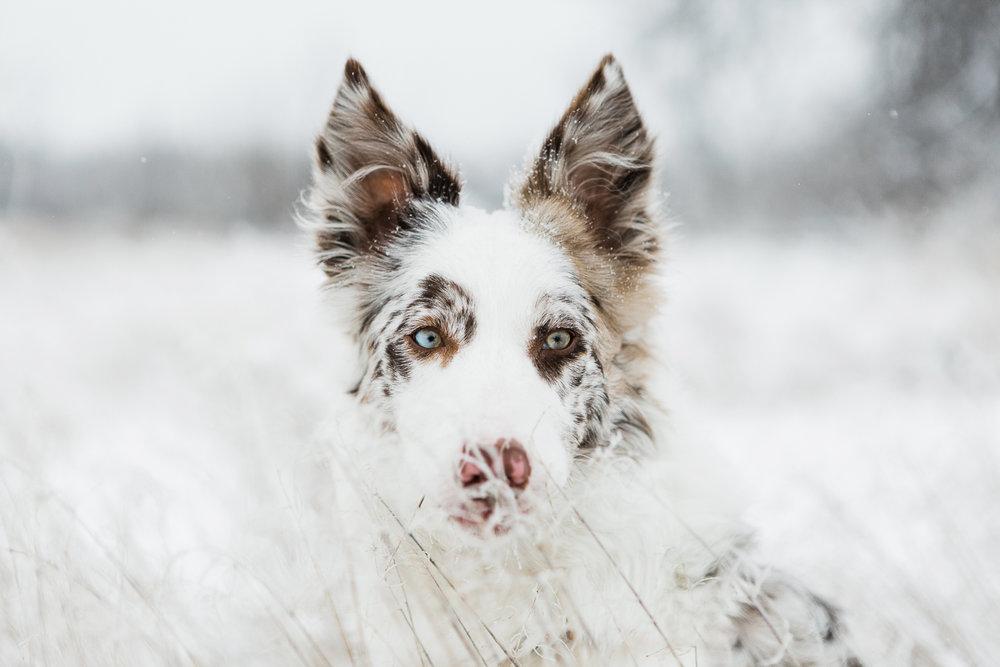 cute puppy photography boulder_005.jpg