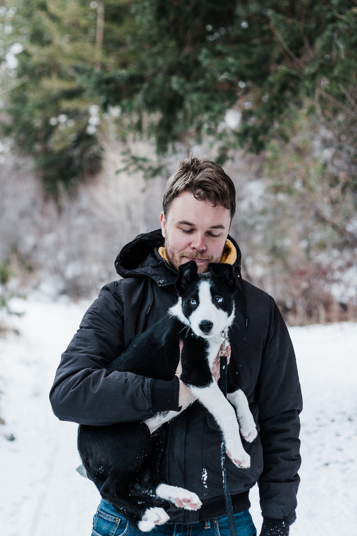 cute border collie puppy_006.jpg