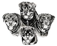 C & G German Import Rottweilers