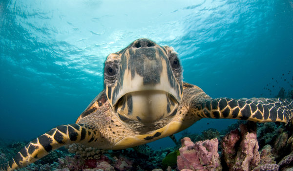 cozumel_turtle.jpg