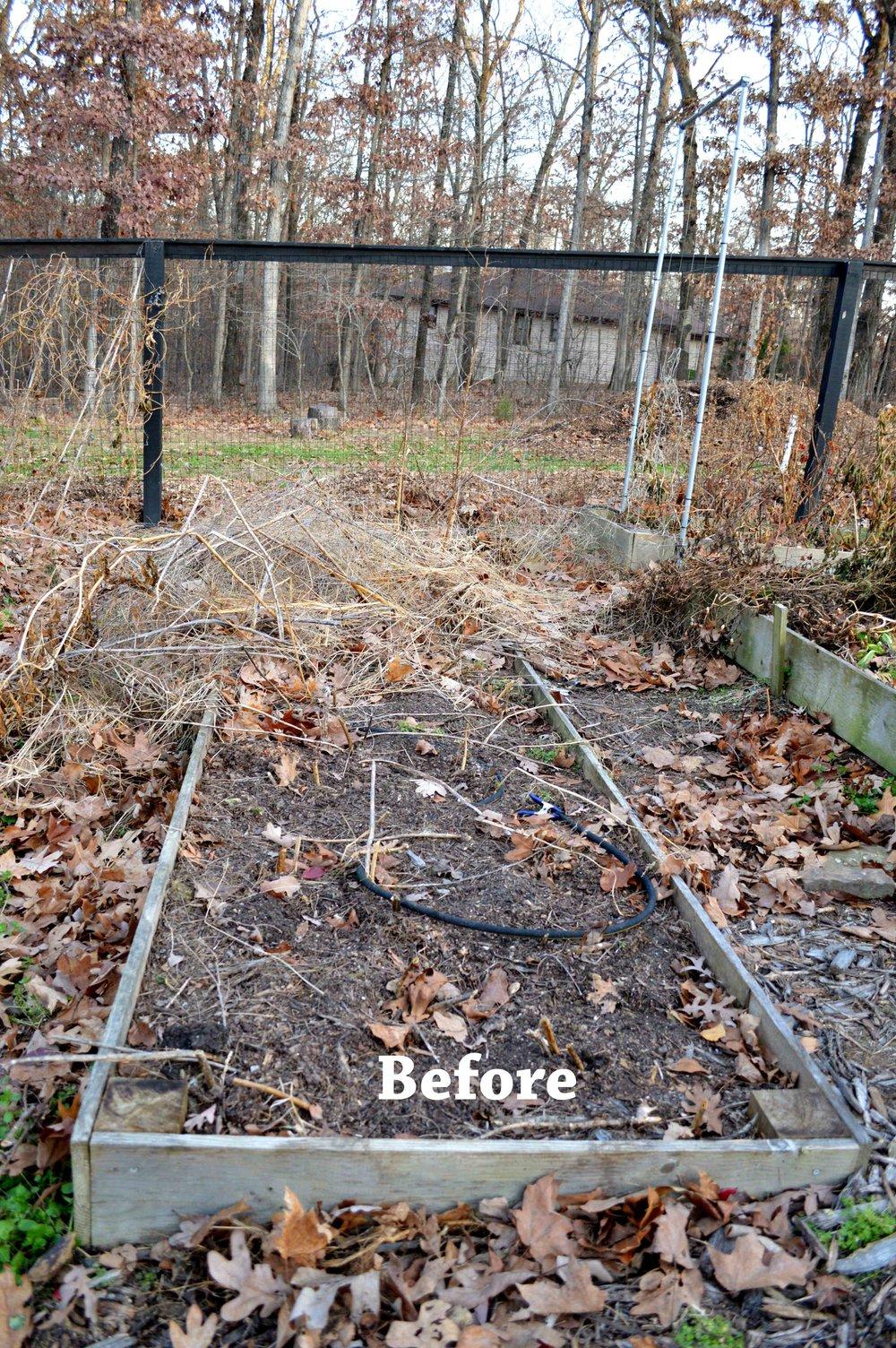 Asparagus Before.jpg
