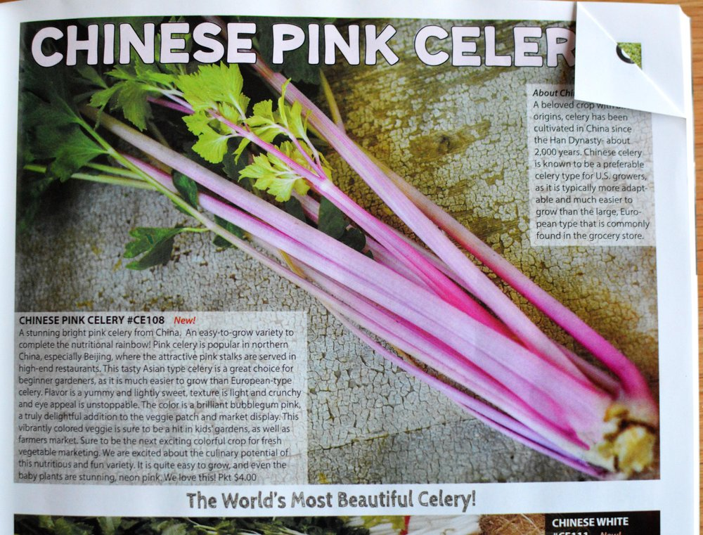 Chinese Pink Celery.jpg