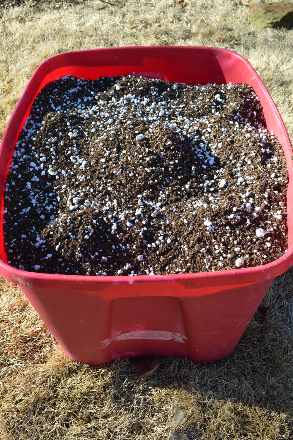 Seedling Mix in Bucket.jpg