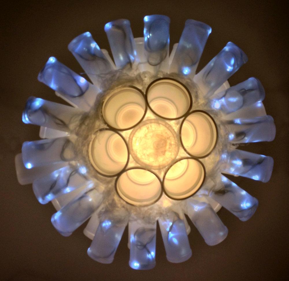 PlasticPlanktonDiatomea.jpg