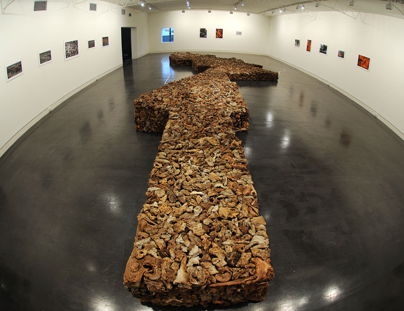 James Darling & Lesley Forwood,  Country , 2011, 3.5 tonnes Mallee roots, 11.25 x 4.75 x 0.45 m