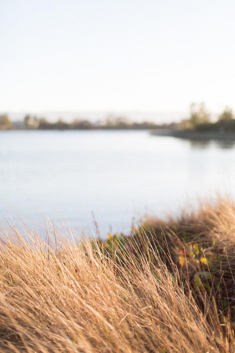 Shoreline+Lake+Honeysuckle (2).jpeg