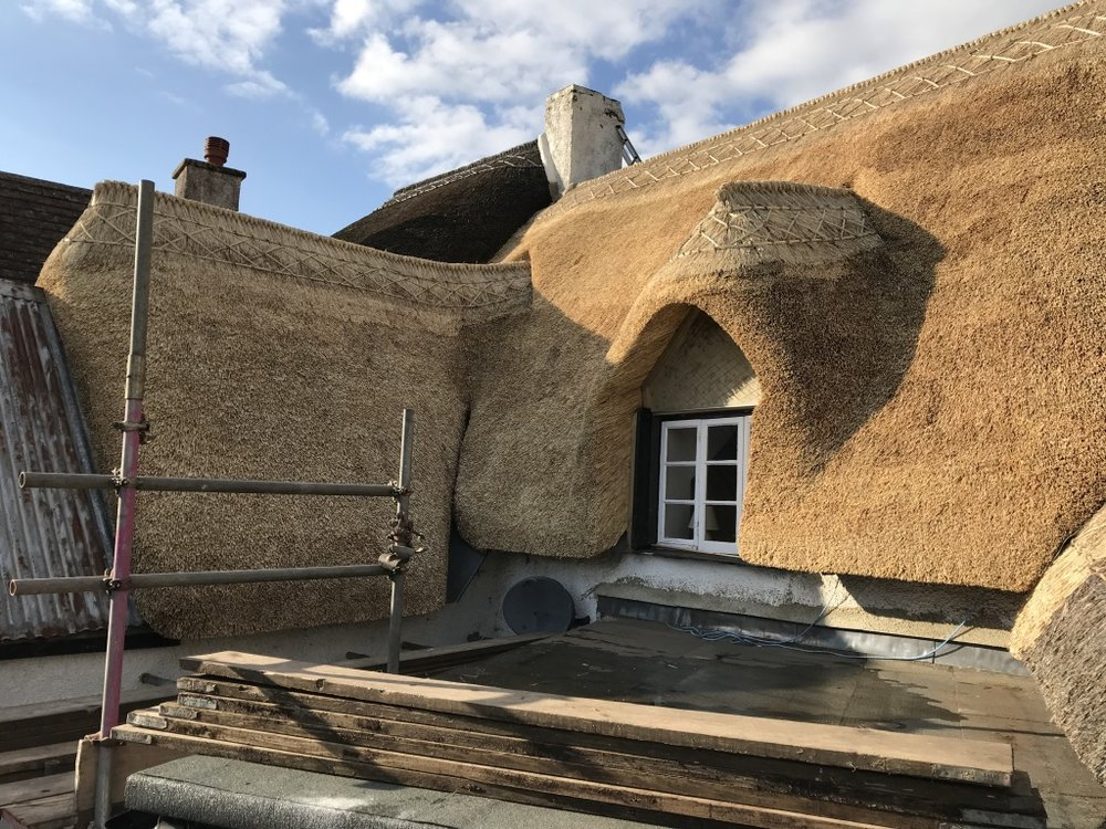 Dunsford wheat reed.jpg