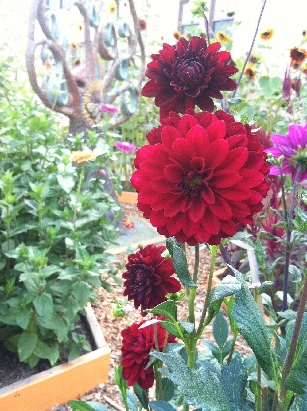 pollinator-tree_garden2.jpg