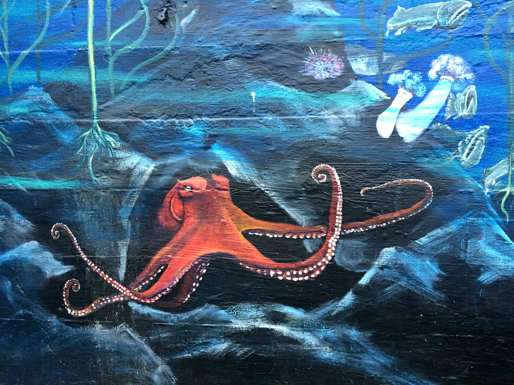 Estuarium Octopus.jpg